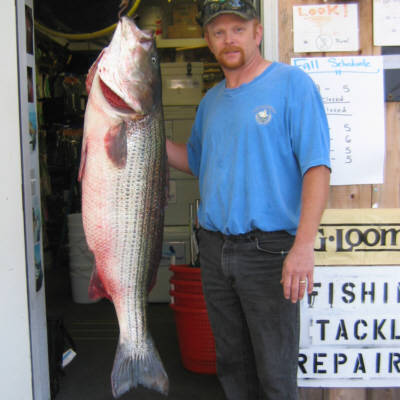 Bruce Stonemetz from Amagansett, NY caught this 57 pound Striped Bass near Gardiners Island. He was using live bunker as bait