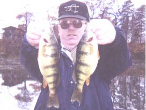 two very big yellow perch