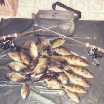 Perch, Bluegill, Crappies, Pickerel all are fun on short ice jigging rods with 2 pound test line