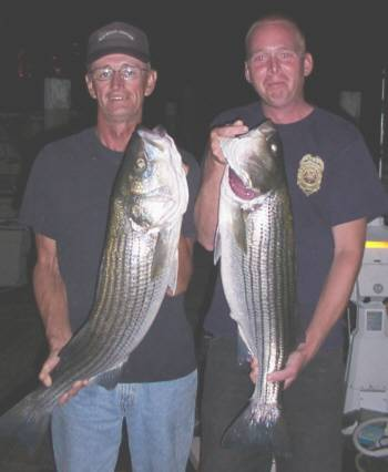 Pictured here is Captain Jeff Roye and Harold Lynn with two Moriches stripers. A 38 incher for the Captain and Harold with a 34 incher. Both caught using clams on the in coming tide in Moriches Inlet on August 6, 2005