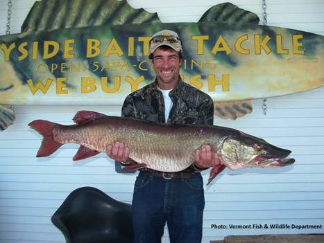 Chris Beebe's Vermont State Record Muskellunge that was caught in 2005 in the Missisquoi River, but it was likely stocked in the Great Chazy River in New York. Photo courtesy of Shawn Good, Vermont Fish and Wildlife