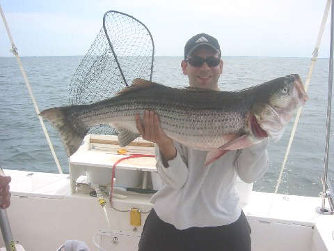 Skip Granger with a 45 pound striped bass that he caught from Orient Point, Long Island, NY.