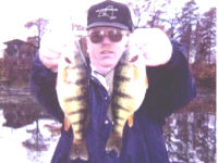 Yellow Perch Fishing In NY